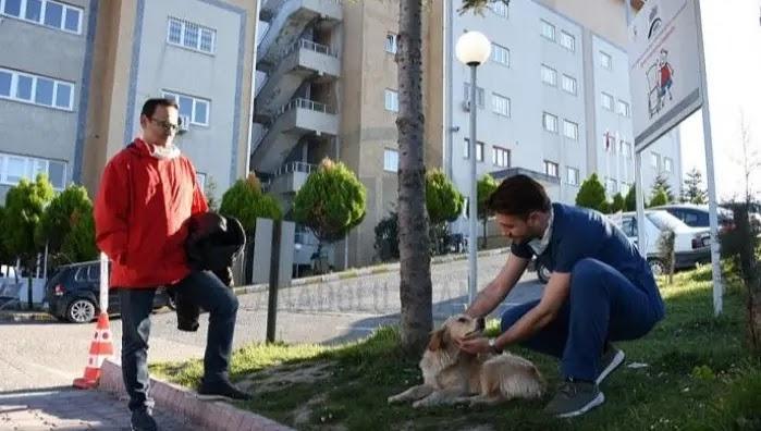 كلب ينتظر صاحبه أمام المستشفى