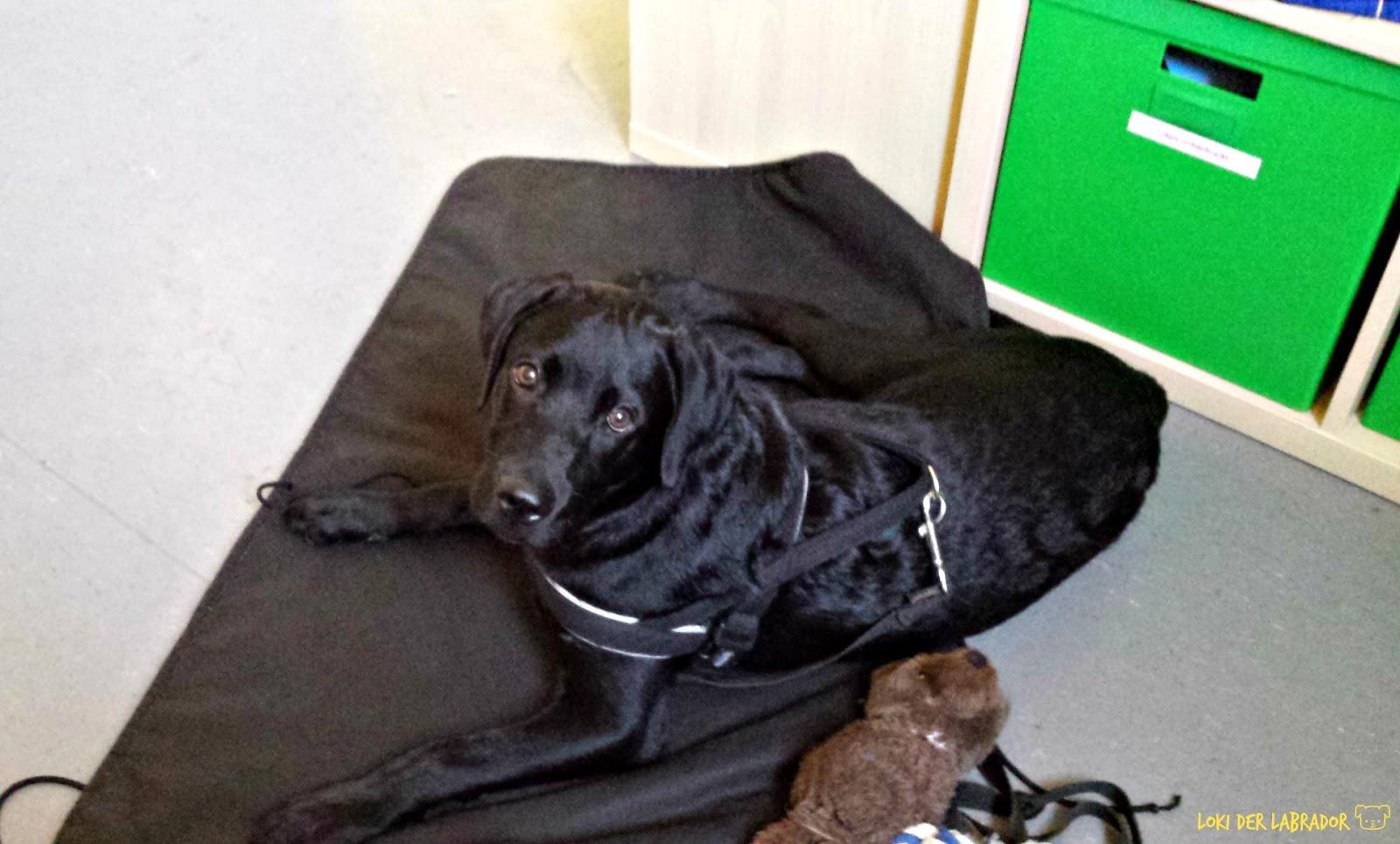 so lernt dein hund alleine zu hause zu bleiben tipps. Black Bedroom Furniture Sets. Home Design Ideas