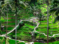 6 Best Things to Do in Ubud You Don't Want to Miss