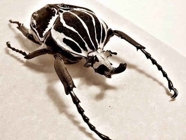 Serangga paling unik dan berat