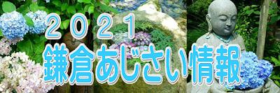 2021鎌倉あじさい情報