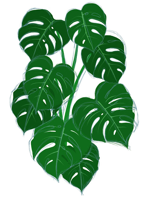 Monstera Deliciosa Sketch and Painting