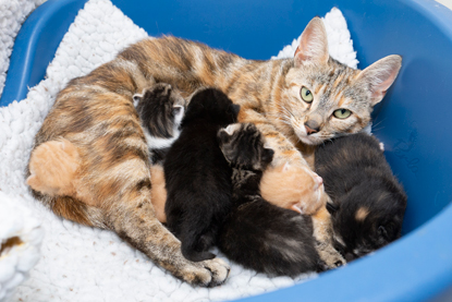 tabby cat with litter of kittens a mix of different colours