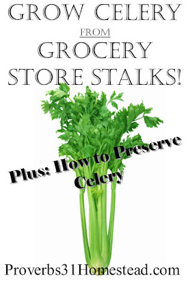 Grow Celery from Grocery Store Stalks
