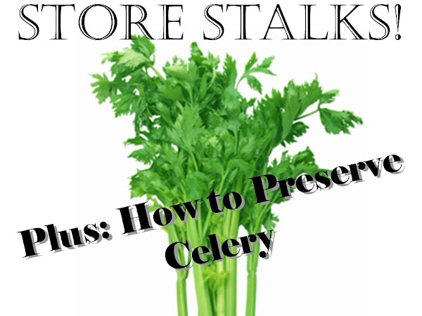Grow Celery from Grocery Store Stalks (Plus, How to Preserve Celery!)