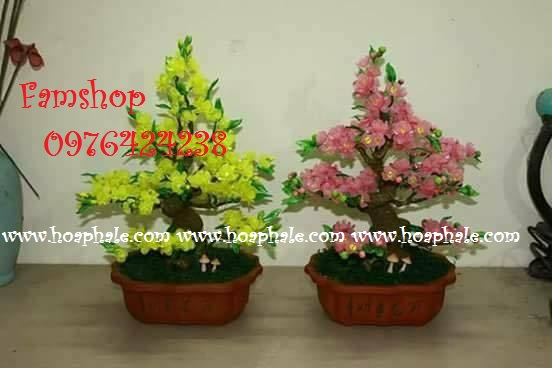 Goc bonsai cay hoa mai hoa dao tai Phung Chi Kien
