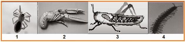 BIOLOGI GONZAGA: TRY OUT BIOLOGI UN TH 2O14