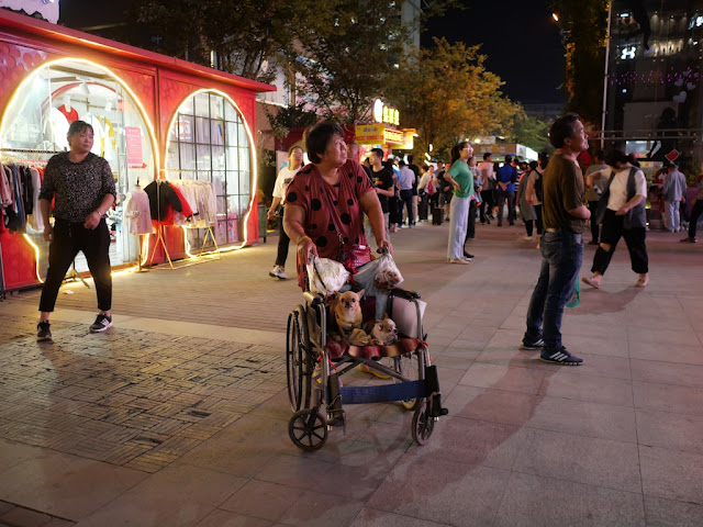 woman pushing two small dogs sitting on a wheelchair