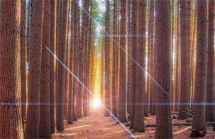 wisata hutan pinus dilereng merbabu