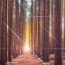 Destinasi keindahan objek wisata hutan pinus dilereng merbabu