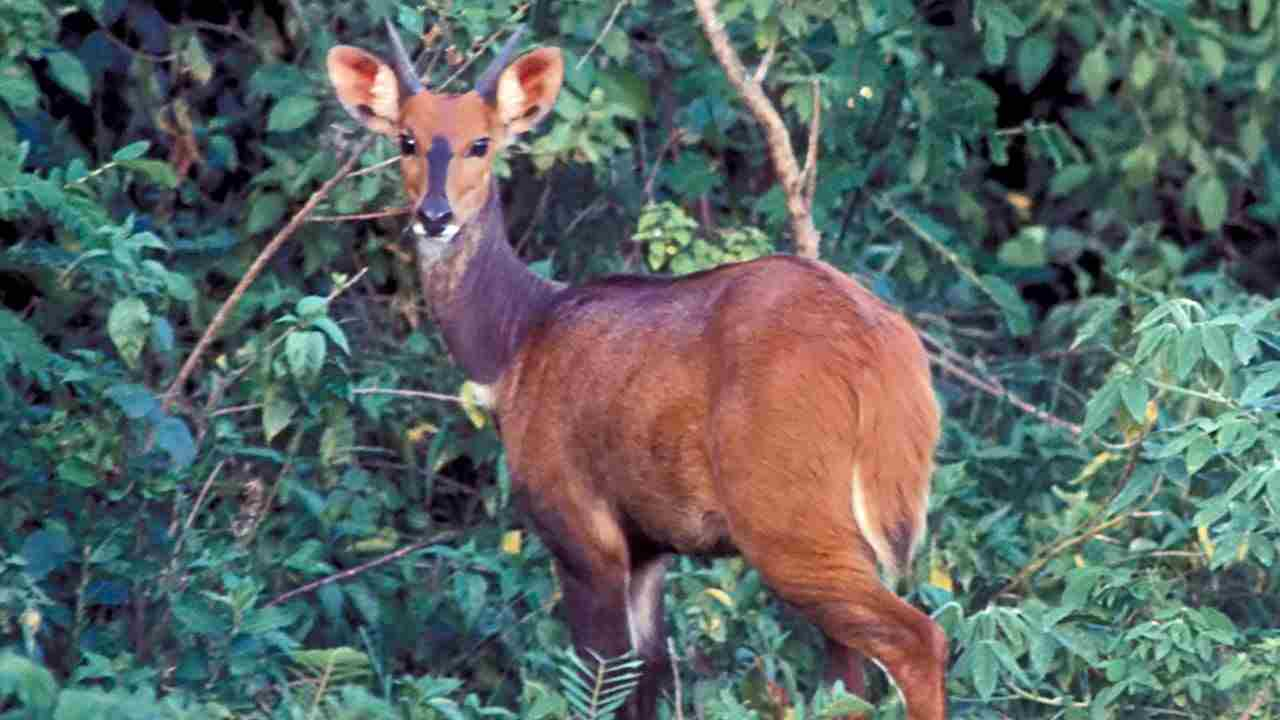 African Animals List A Z Animals Name A To Z