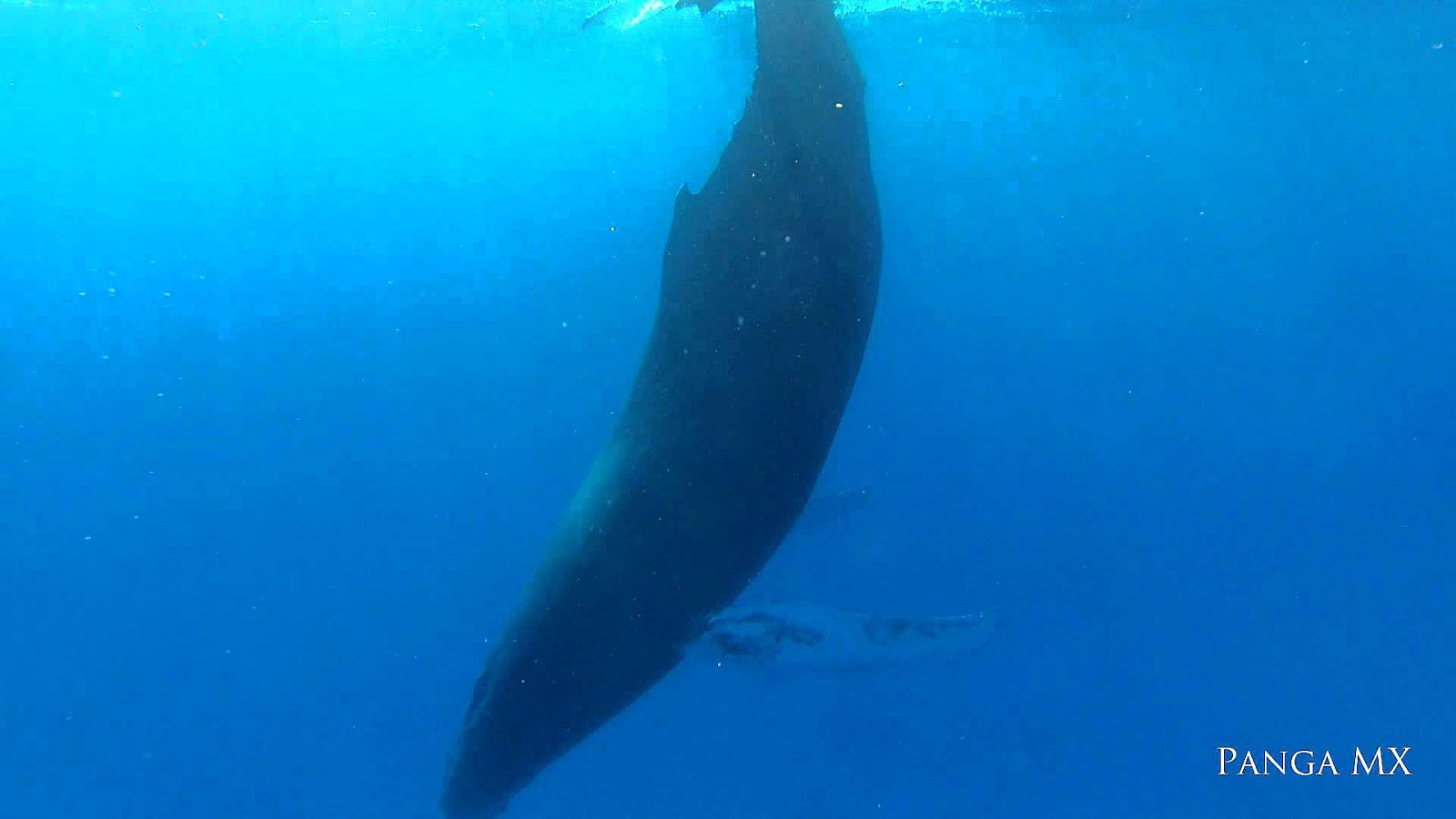 whale groups Sperm mating