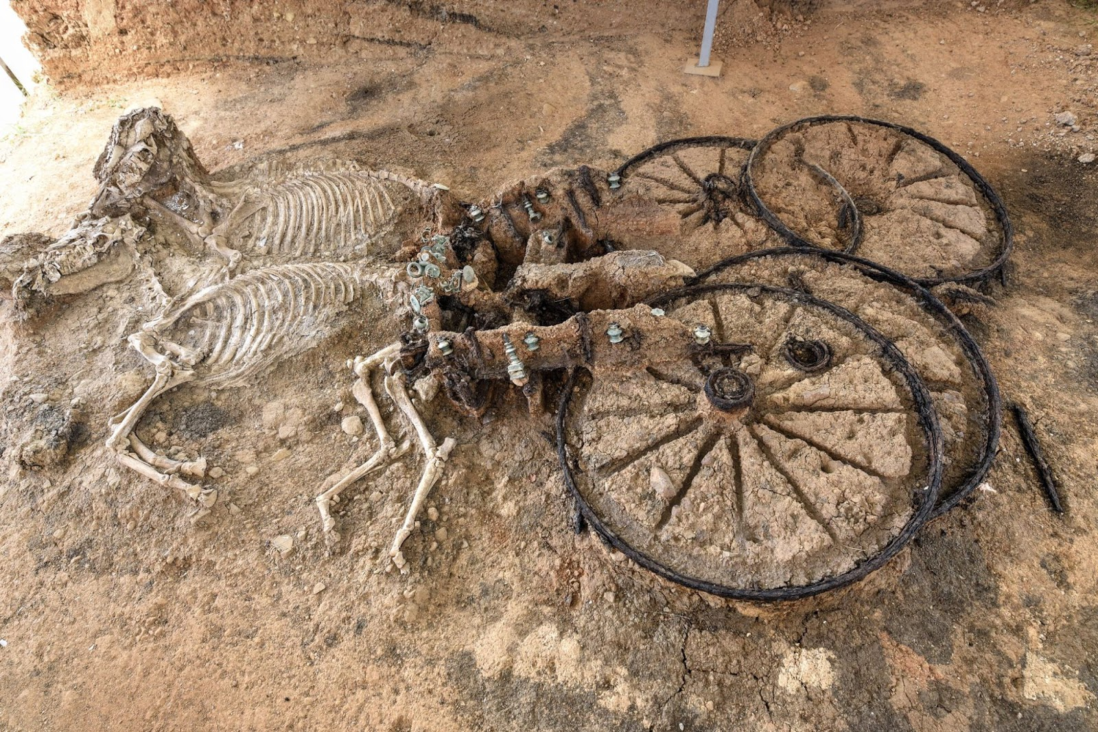 An 2000-Year-Old Thracian Chariot With Horse Skeletons Found in the Village of Karanovo, Bulgaria