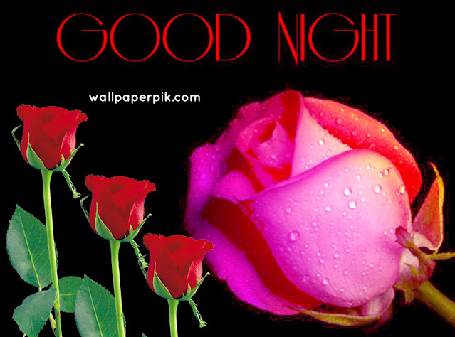roses good night images