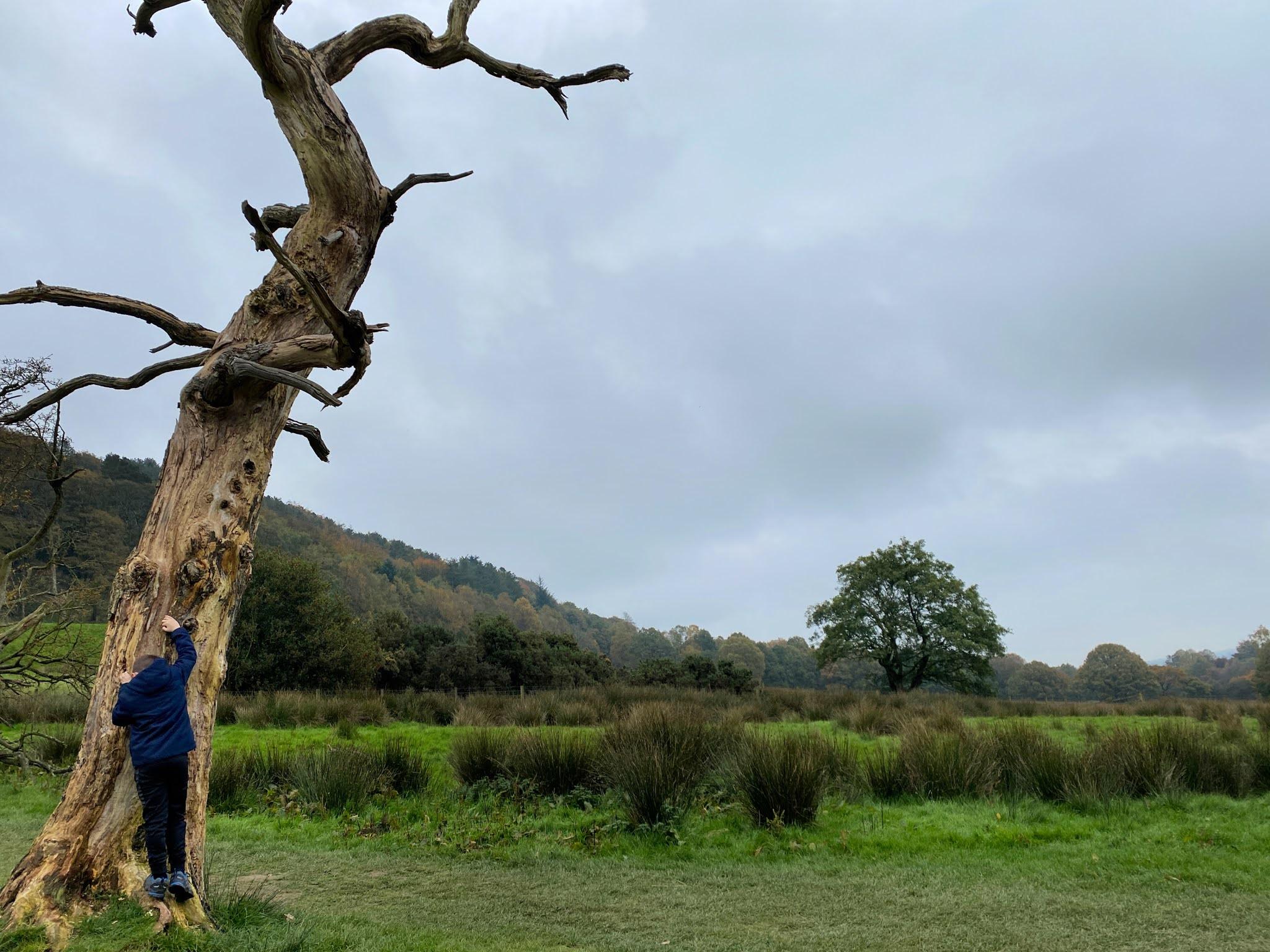 Climbing a Rivington Tree