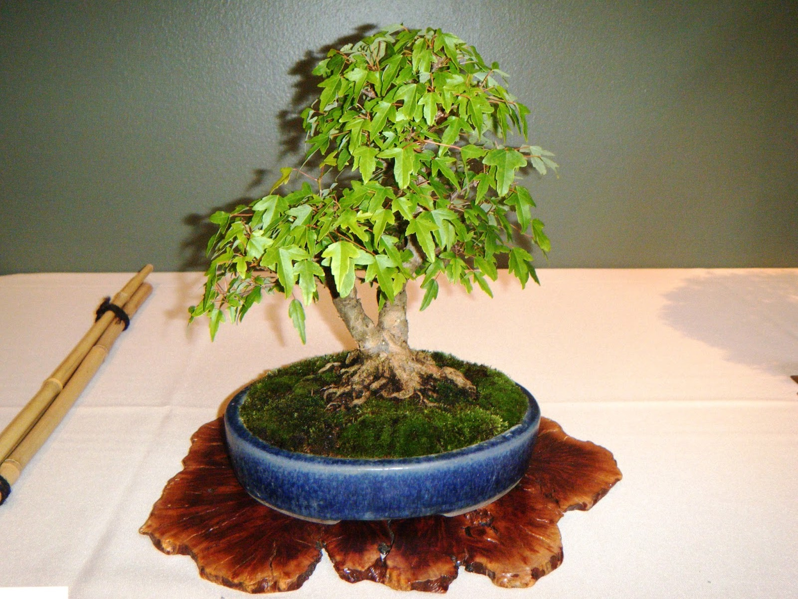 Bonsai In Hoosierland Mid America Bonsai Exhibition 2016 Some