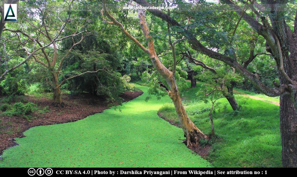 Anawilundawa Wetland