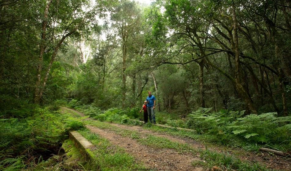 Grootvadersbosch, Cape Nature, Swellendam, Californian Redwood trees, Champion Trees, Hiking, Birding, Forest Birds, Forests, Mountains, Mountain Biking