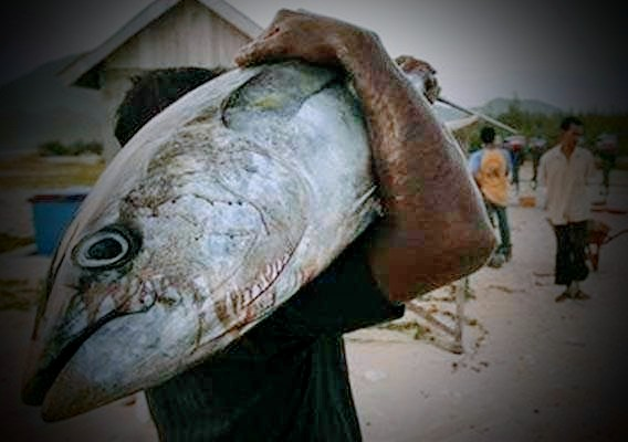 Sumber foto sulawesi-bisnis.com