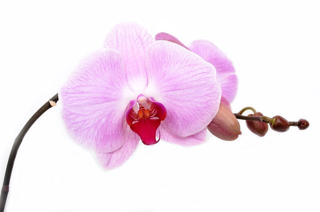 y nghia phong thuy hoa lan ho diep