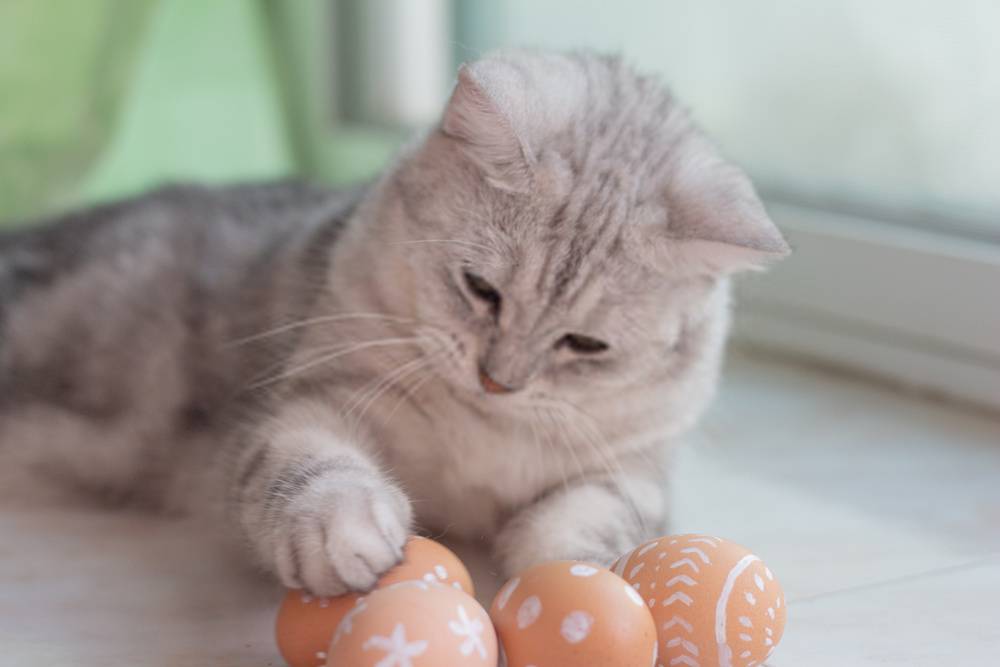 Is It Dangerous to Feed Your Cat Raw Eggs?