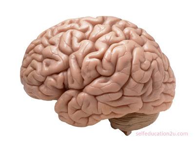 how to control your mind, आखिर हमारा दिमाग काम कैसे करता है