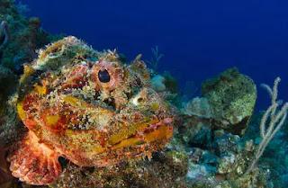 Stone fish, পৃথিবীর সবচেয়ে ভয়ংকর মাছ