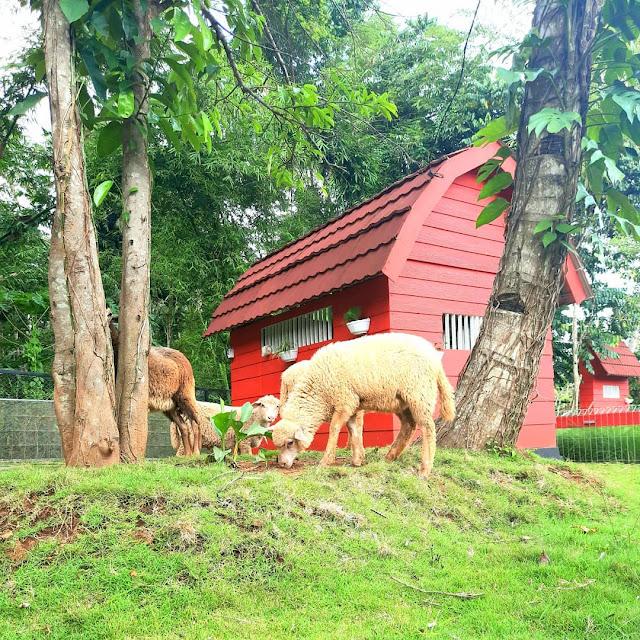 Alamat Akbar Zoo Banyuwangi