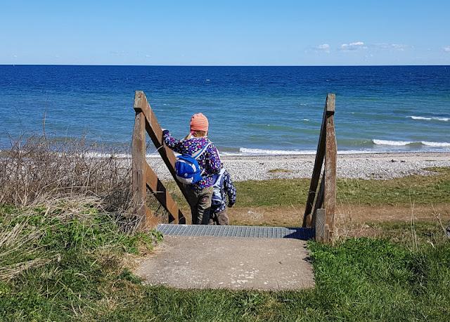 Küsten-Spaziergänge rund um Kiel, Teil 3: Raps, Steine und Meer bei Hohenfelde. Die Treppe führt die Steilküste hinunter zum Strand.
