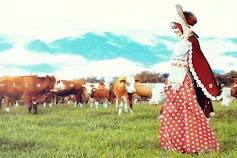 Padang Mangateh, Peternakan Sapi Seperti Desa Hobbiton New Zealand