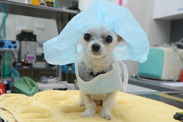 Covid-19, influenza-like illness, ILI, veterinary wellbeing, public heath
