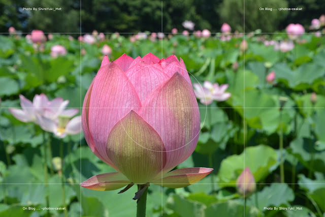 花 蓮 Lotus Blossom Kenny Dorham