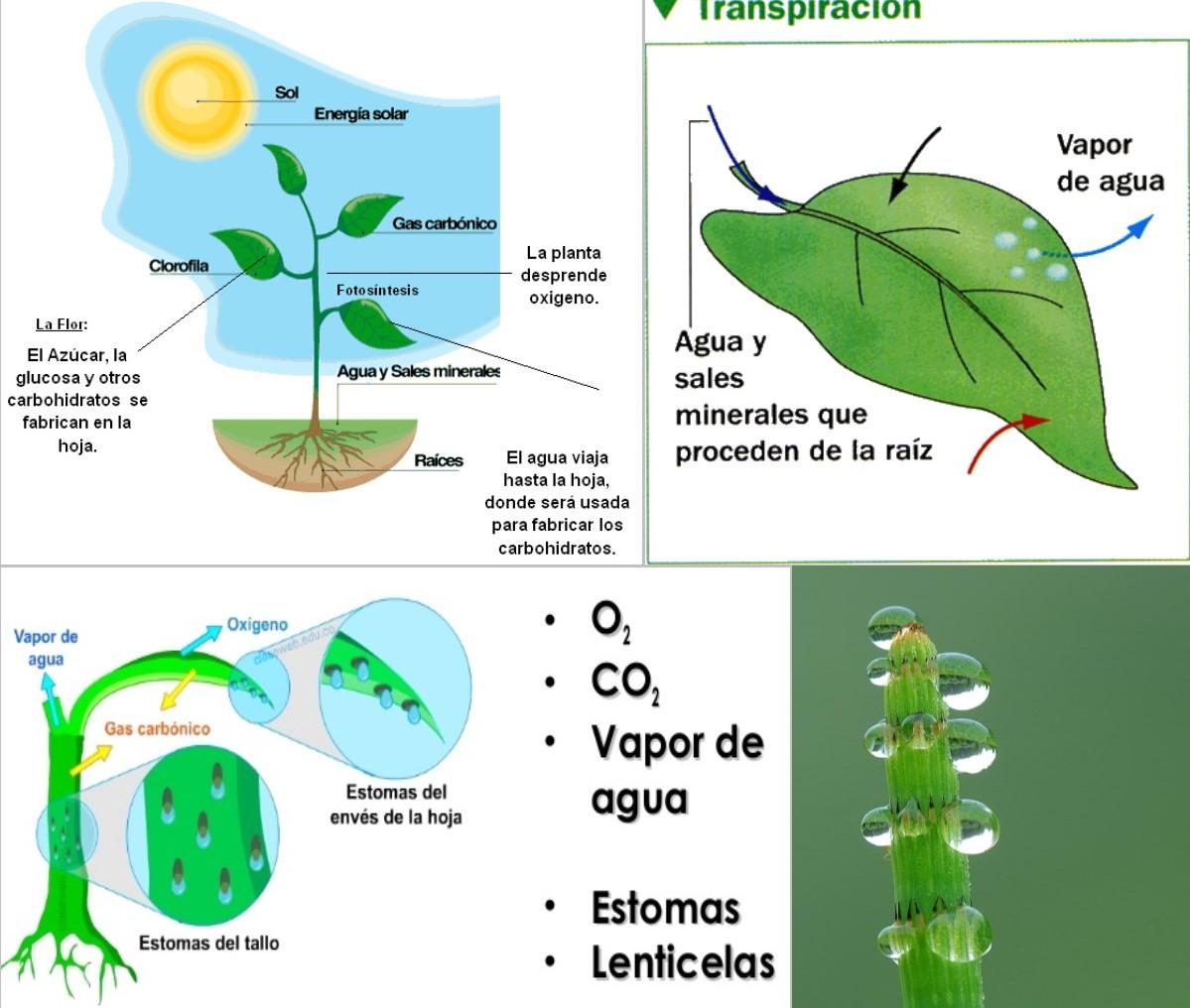4. Histología y fisiología vegetal II \