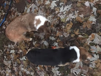 Yadi and Marley in the leaves