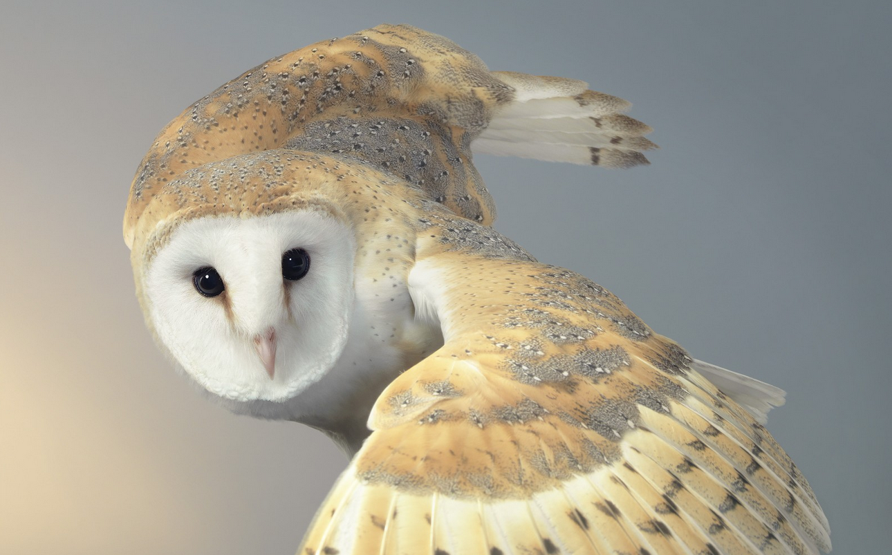 Tim Flach Photography Owl