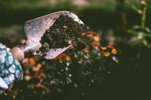 Manfaat Berkebun untuk Membentuk Tubuh