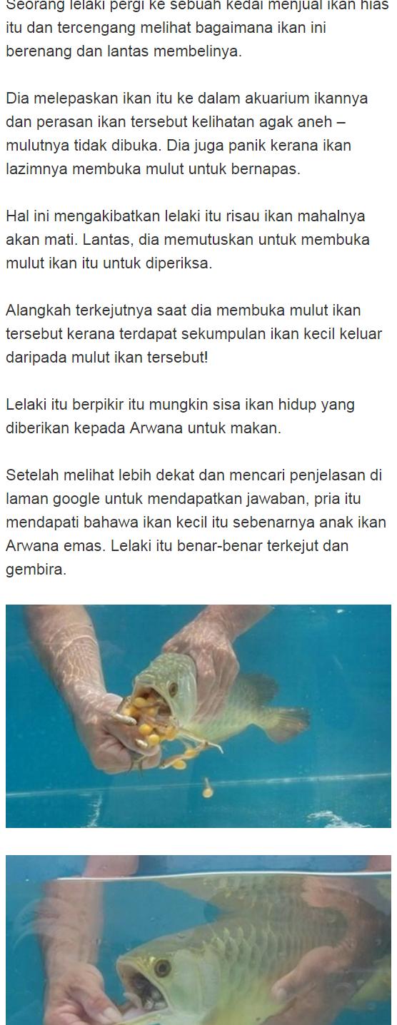 Ikan wechat anak Anak Ikan