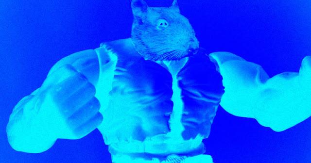 فئران ناسا العملاقة عادت من رحلتها الفضائية