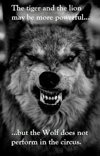 Wolf Lion Quotes