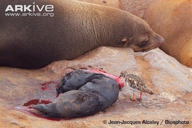 bird and brown fur seal