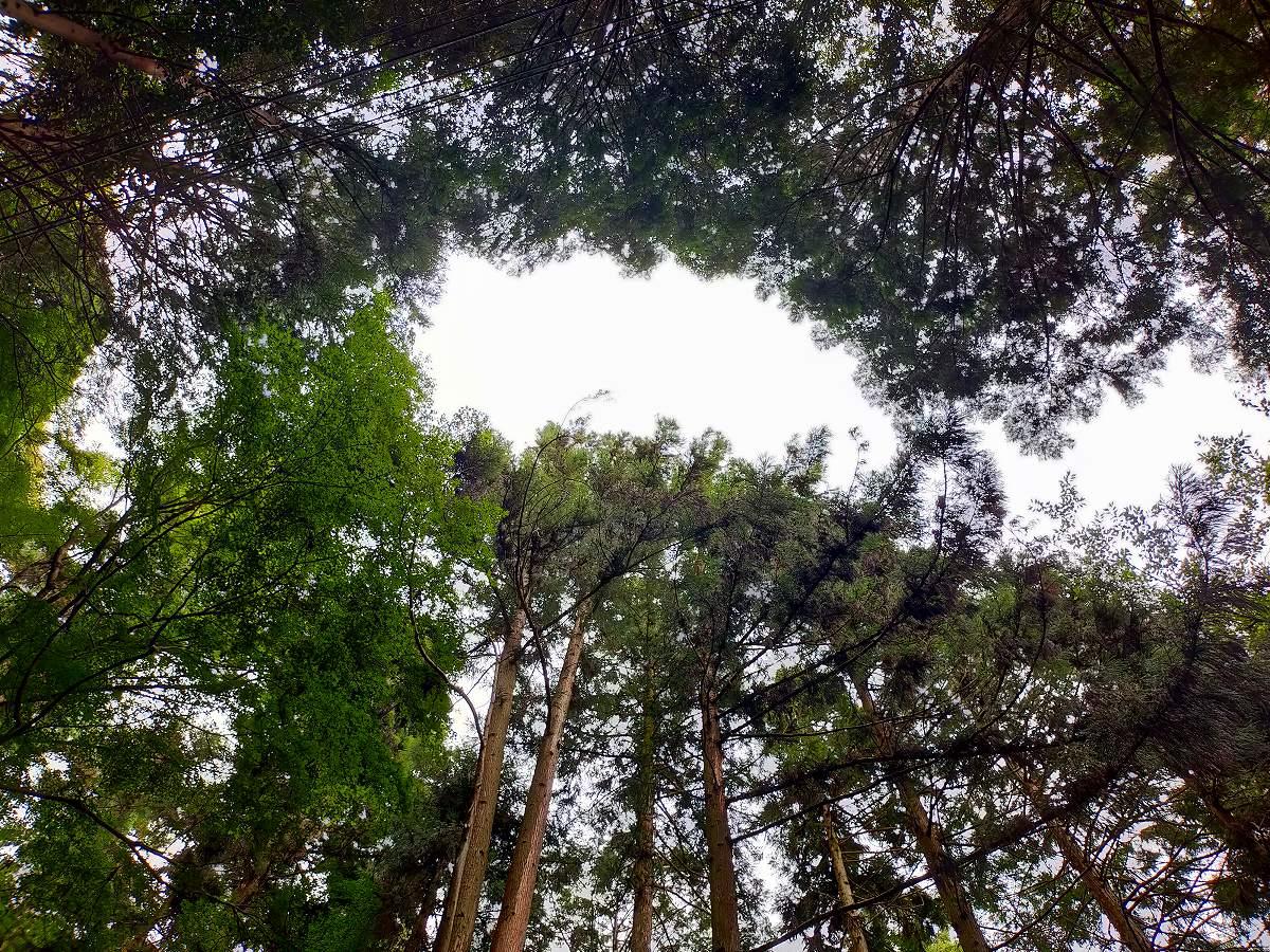 見上げると鬱蒼と木々が生い茂っています。