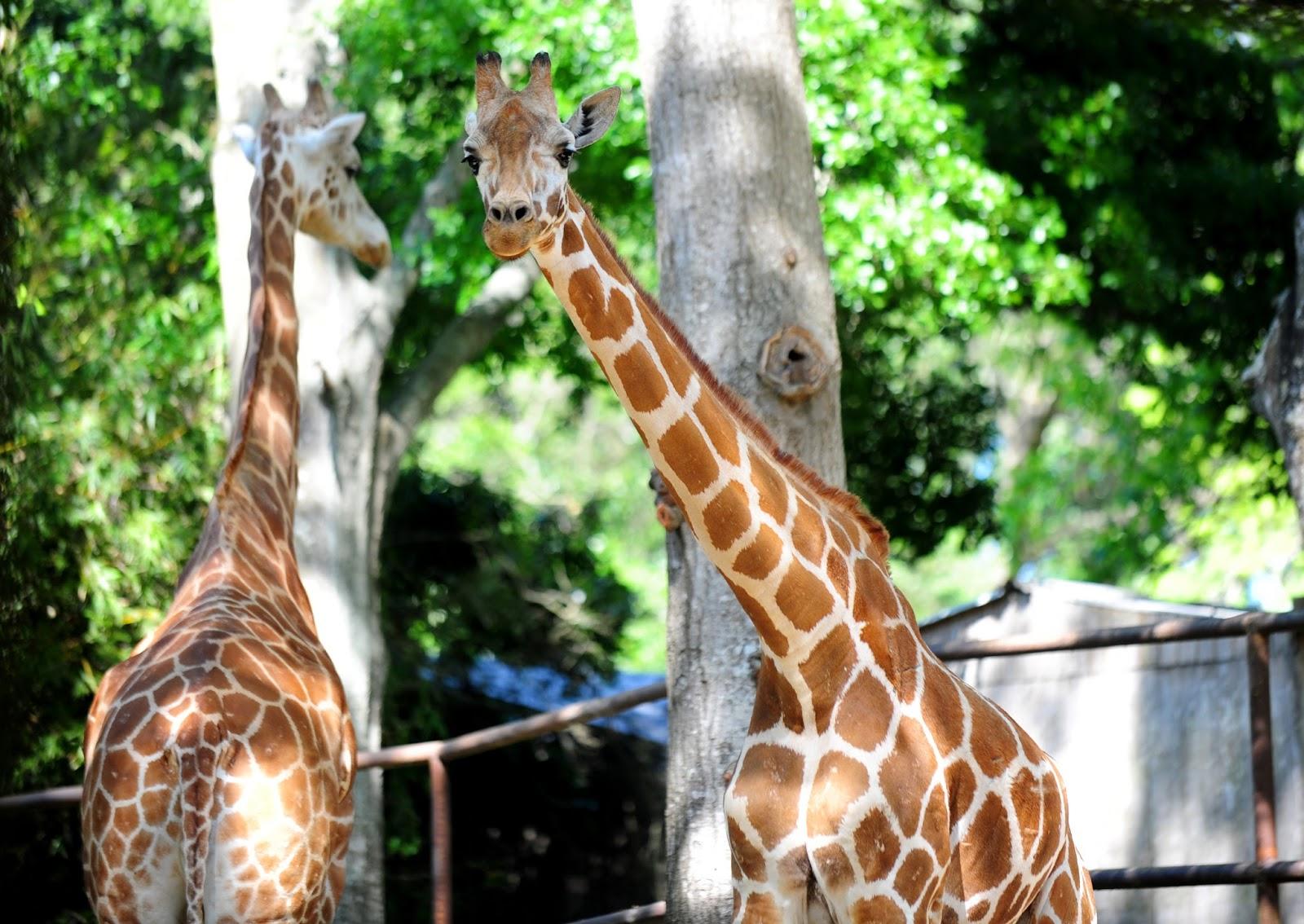 Hello Zoo Of Acadiana
