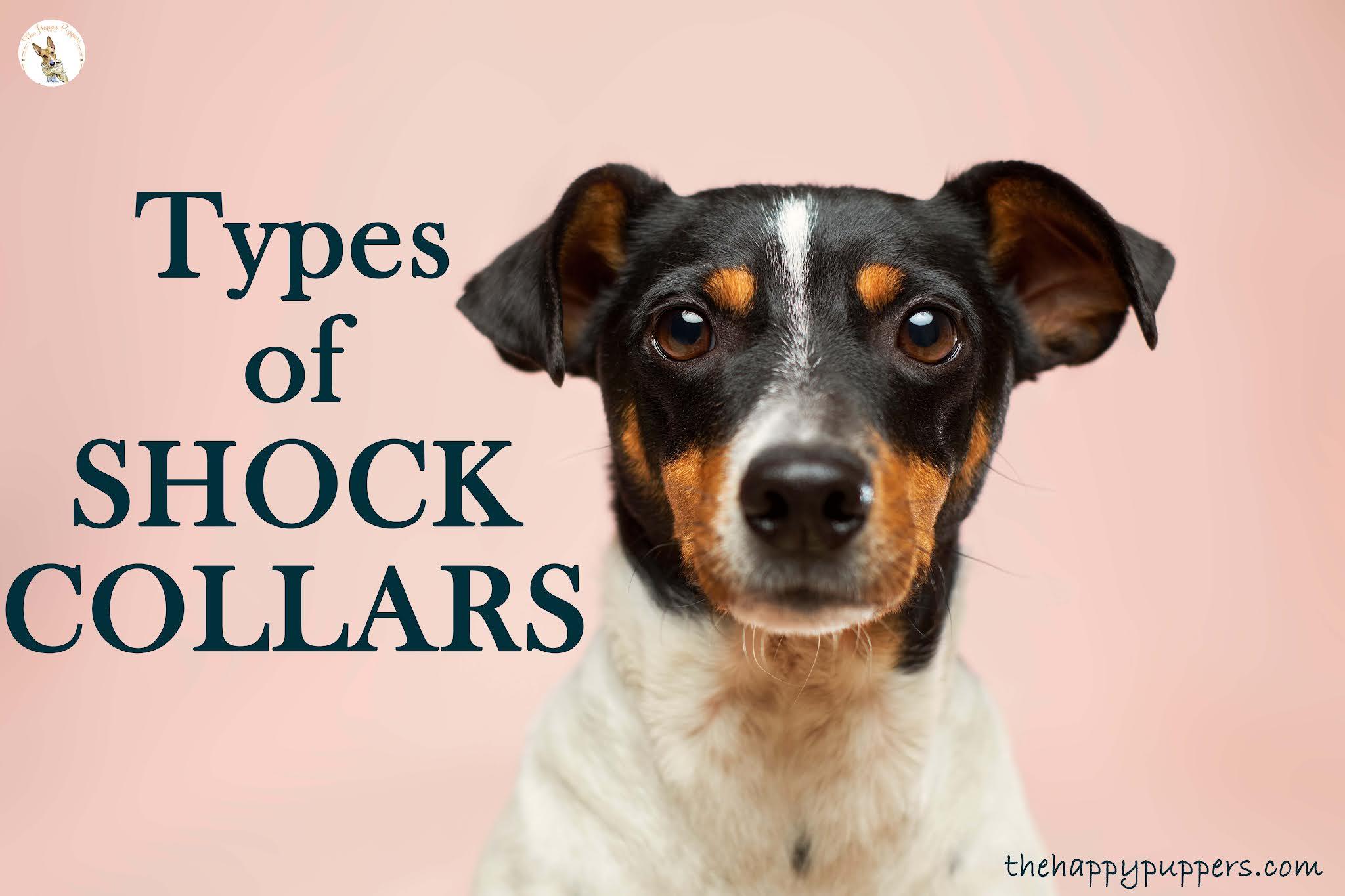 Types of shock collars