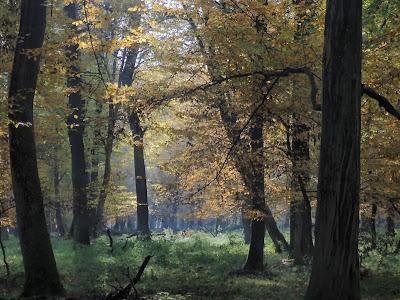 grzyby 2019, grzyby w październiku,Puszcza Niepołomicka jesienią