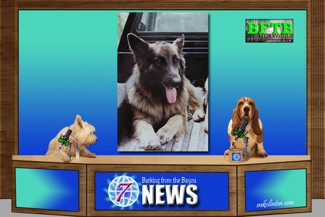 BFTB NETWoof News on legal marijuana and K9 dogs