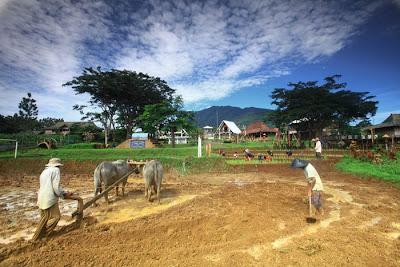 Pertanian dan Membajak Sawah