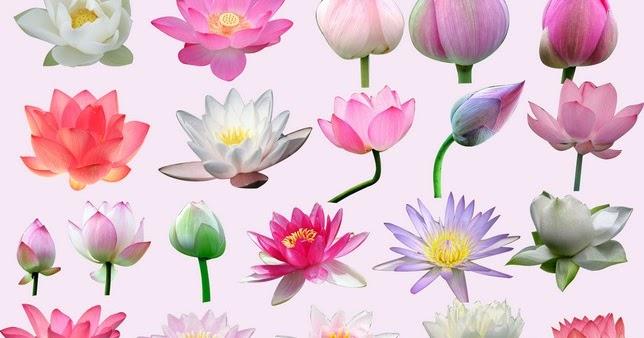 Jayarava's Raves: Lotus: Synonyms in Sanskrit