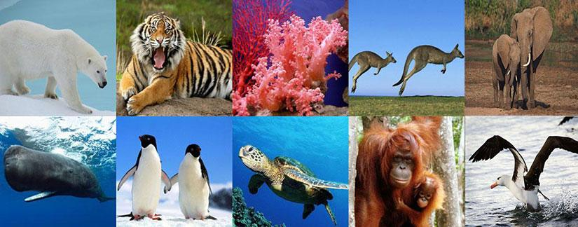 Causas y Consecuencias de los Animales en Peligro de Extincion