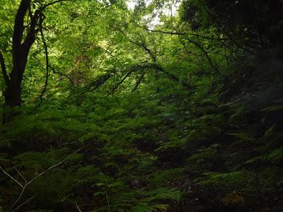 登り口の草薮