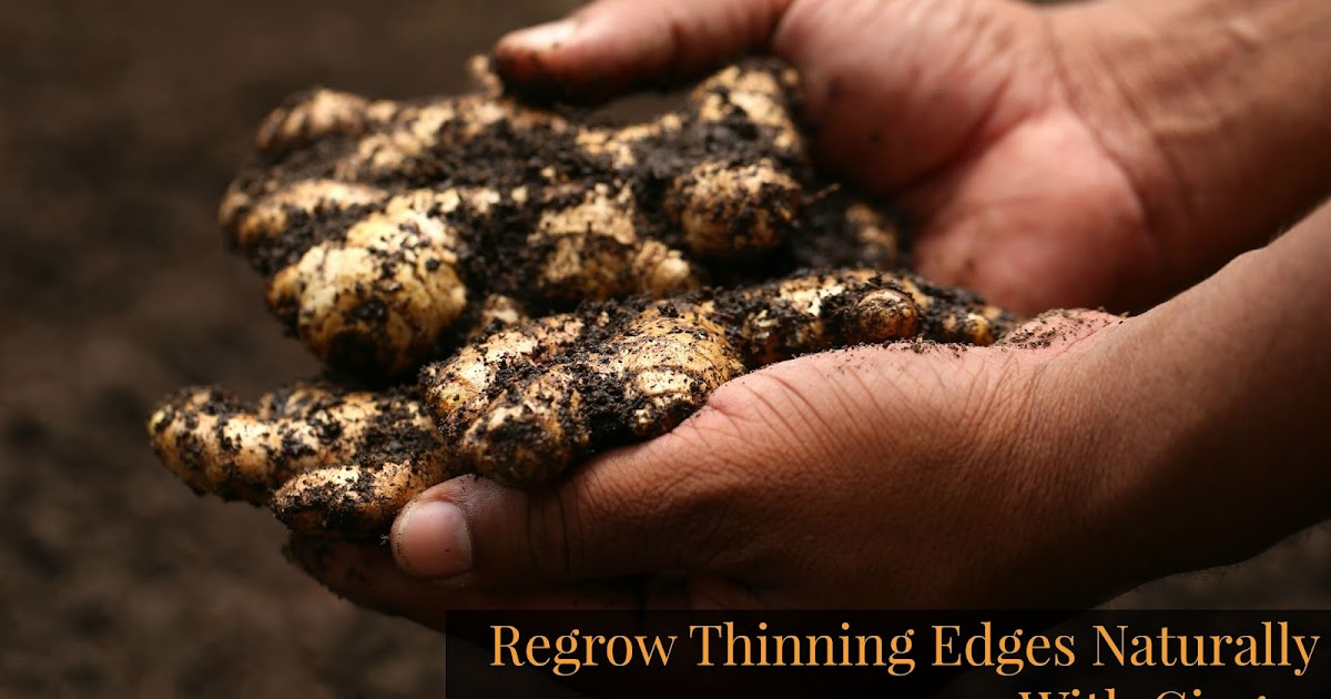 Regrow Thinning Edges Naturally With Ginger Seriously